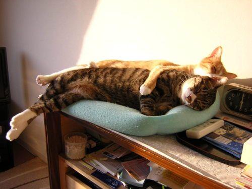 cats♡