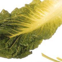 Os alimentos que se podem por nas saladas são variados. Explicamos-lhe como escolher e preparar os legumes que pretende por nas suas saladas.