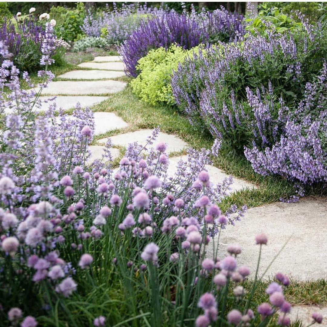 Lavender Catmint And Salvia Mixed Together Is One Of The