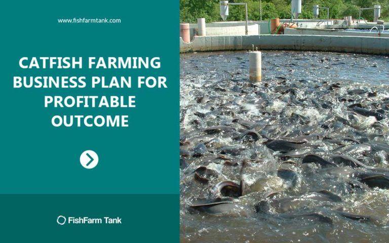 1 Catfish Farming Business Plan for Profitable