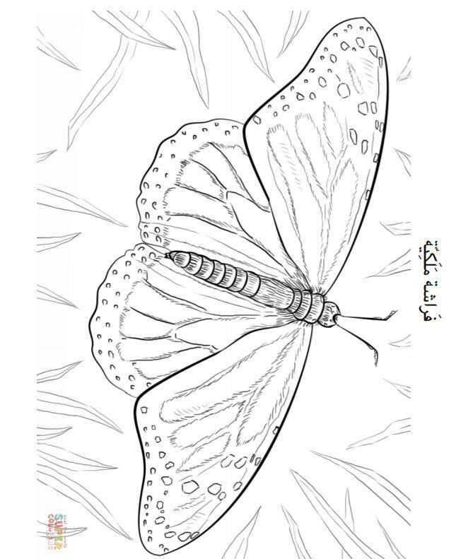 Arabic coloring page. Arabic butterfly coloring page. Arabic ...