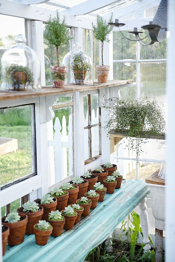 DIY Window Greenhouse   Window greenhouse, Antique windows and Gardens