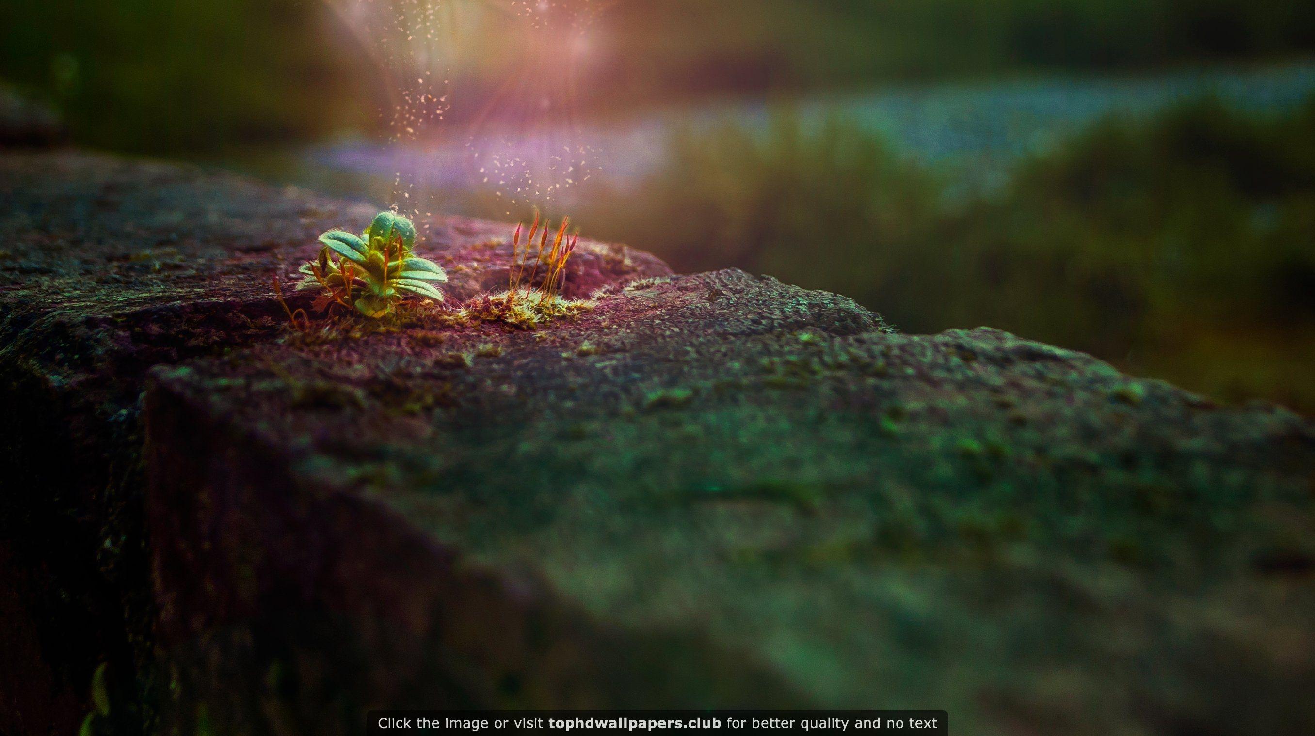 4k Hd Wallapaper: Plants Bricks Magic 4K Or HD Wallpaper For Your PC, Mac Or
