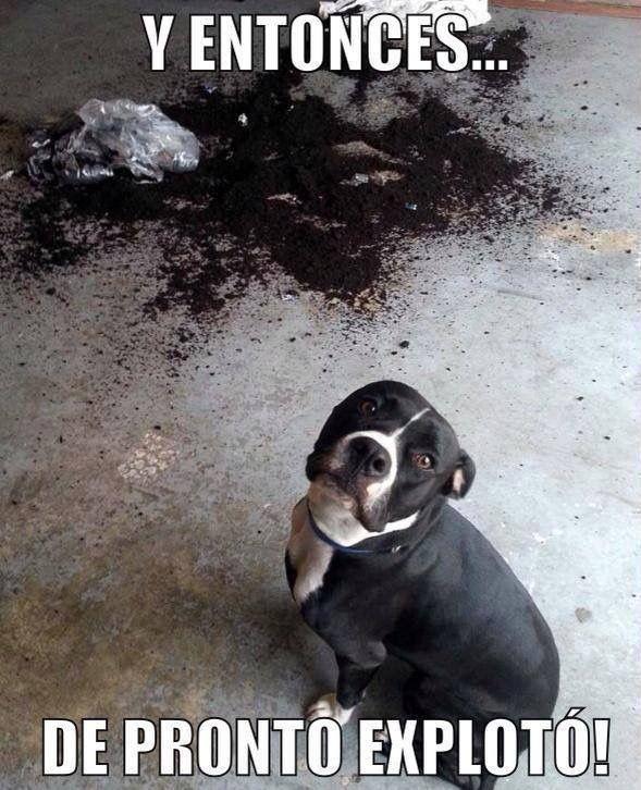 Pin De Juan Angeles En Pets Cachorros Adorables Perros Cachorros