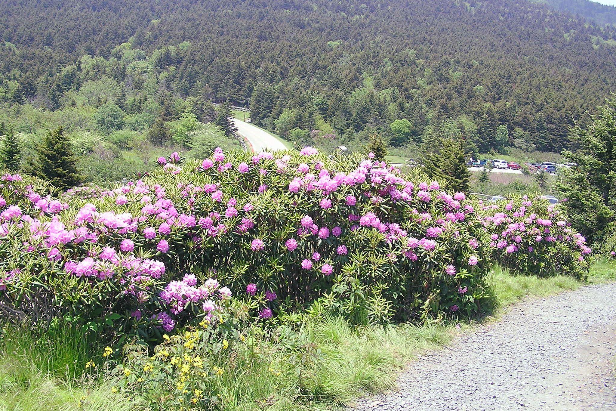 Roan Mountain, 2006