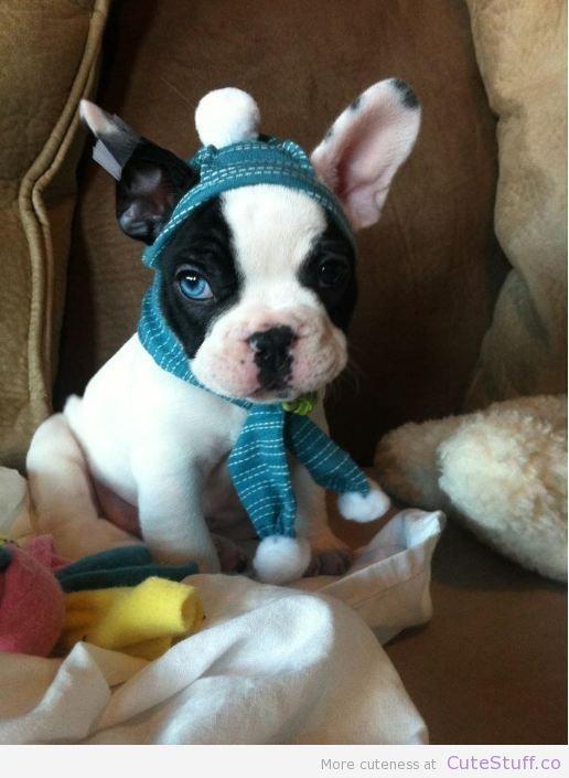 Cool Cute Puppy Blue Eye Adorable Dog - c00c50faeec7dedacf78ed088823e7af  Gallery_3197  .jpg