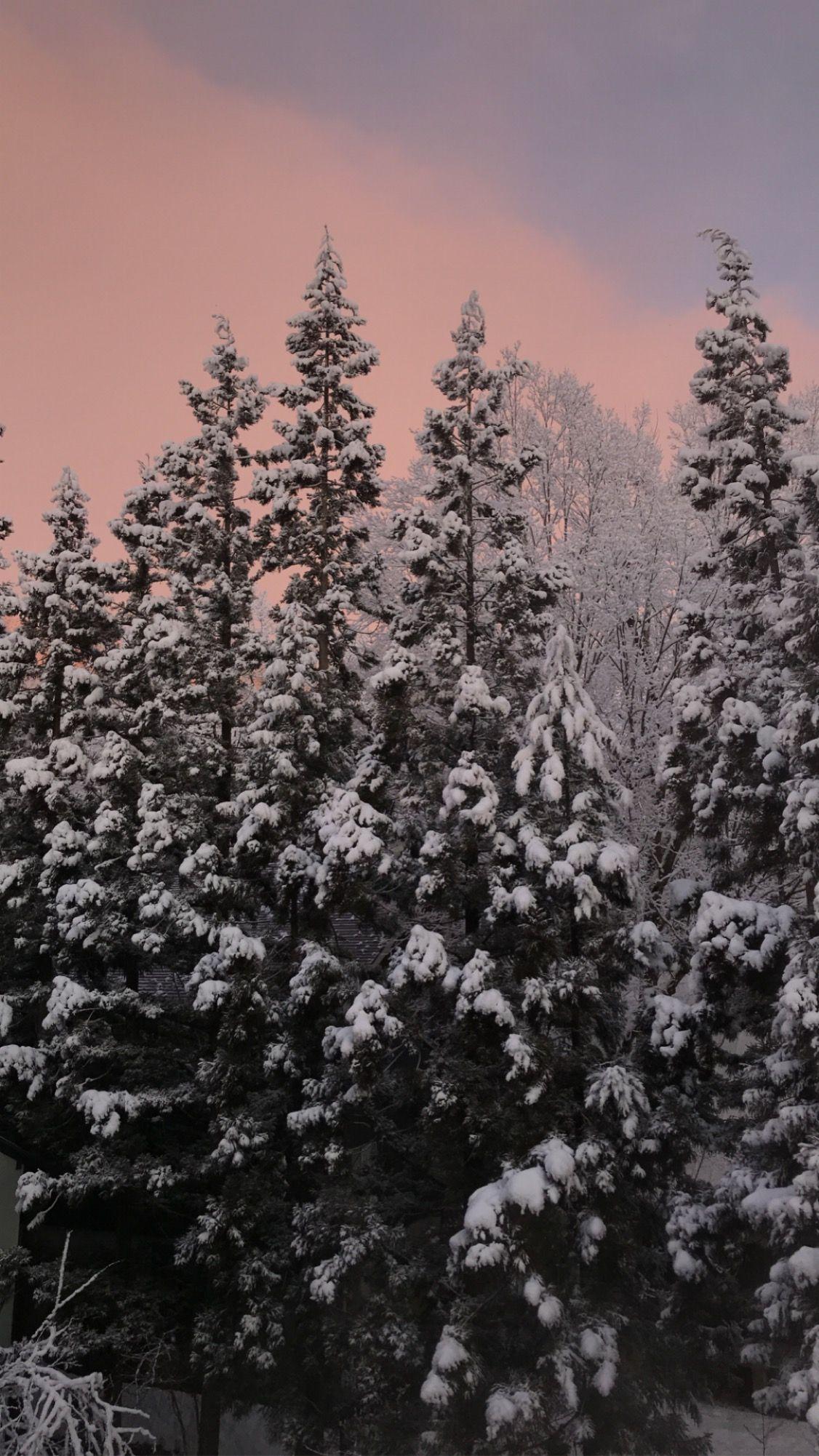 Sunrise in Hakuba #view #snow #trees #forest #pinksky #sunrise