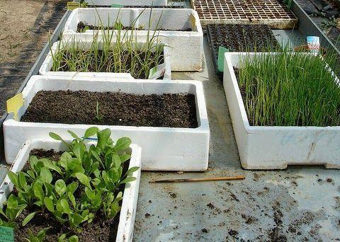 Cómo cultivar en semilleros y conseguir un éxito absoluto