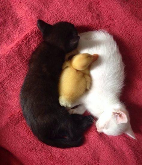 chats-noirs-blancs-08 Plus