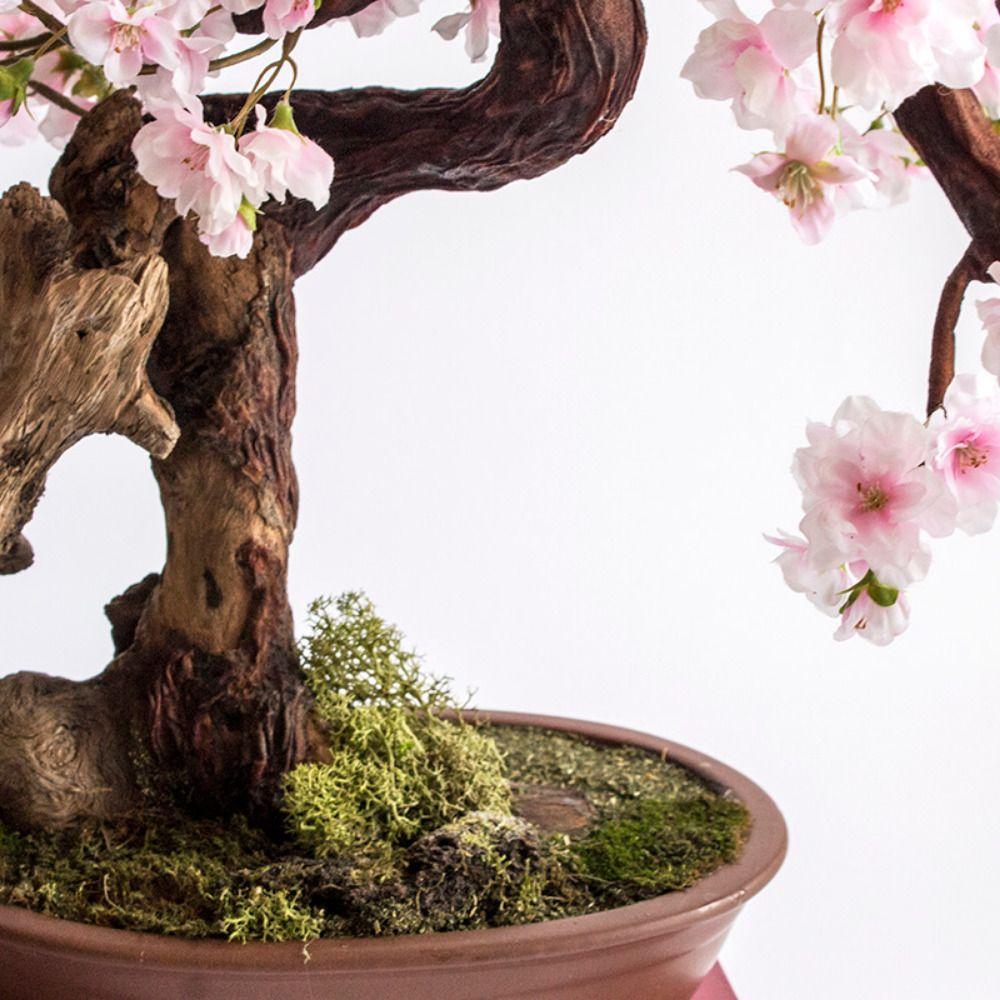 Bonsai Sakura Concepto Salones