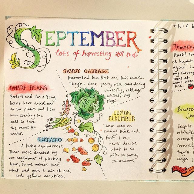 i almost forgot to upload my allotment journal pages for september full spread can be seen. Black Bedroom Furniture Sets. Home Design Ideas