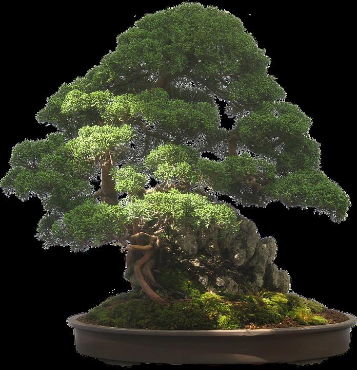 Free Image On Pixabay Bonsai Tree Plant Potted Plant Bonsai Tree Bonsai Tree Types Plants
