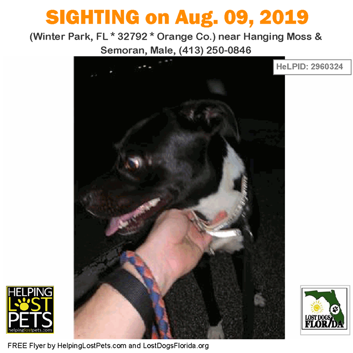 SIGHTING Is this your lost dog? Do you know this Dog?
