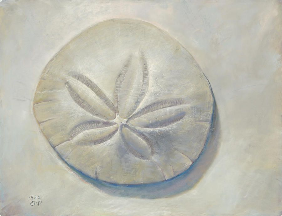 sand dollar sand dollar drawing from votes by the sea