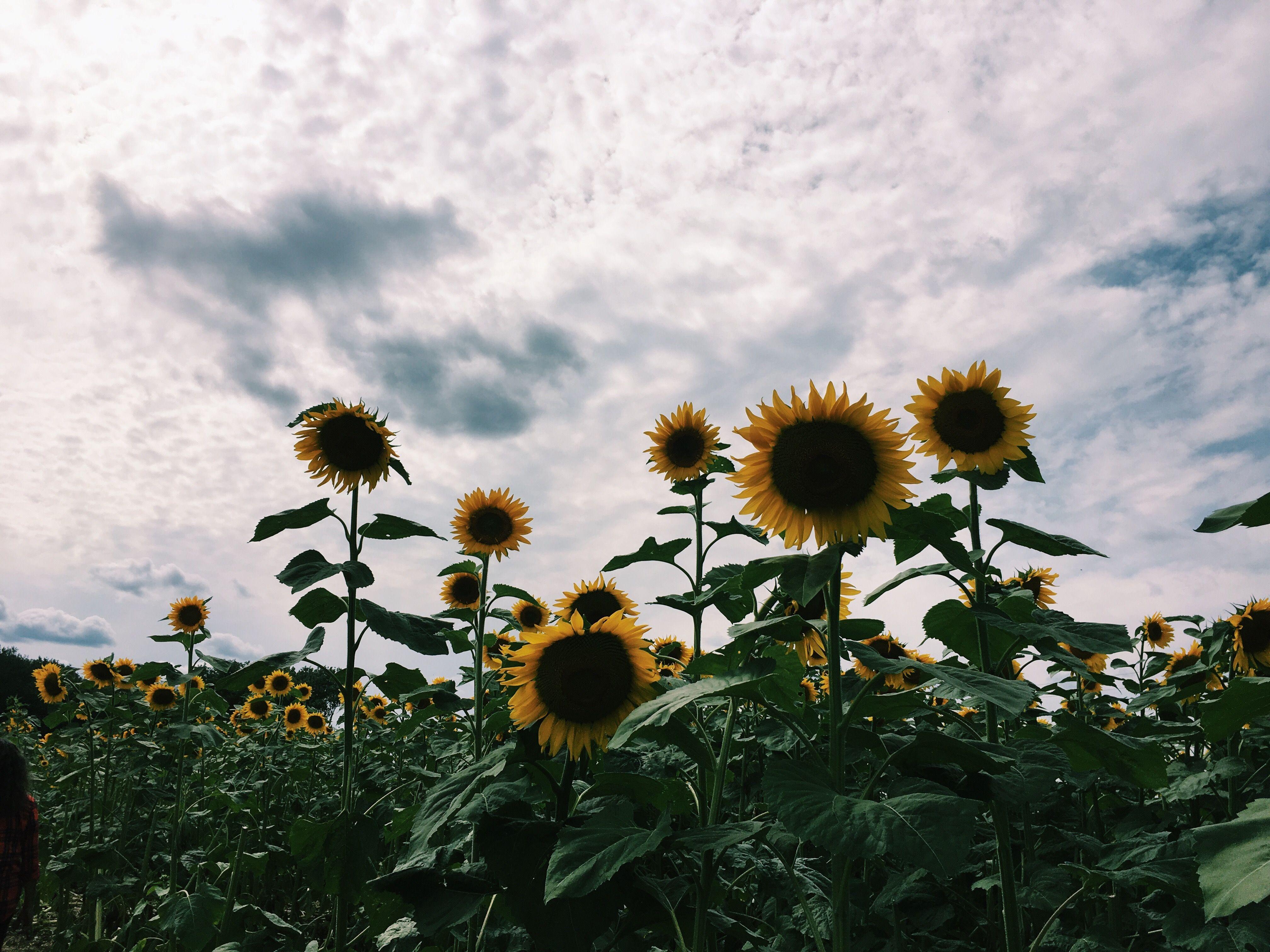 Flores Hermosas Flores Silvestres Fondos De Pantalla Gratis: Pinterest: Lookingthestars