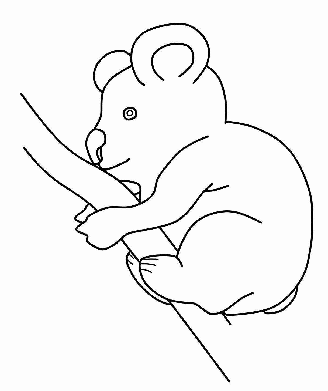 Koala Bear Coloring Page Awesome Free Printable Koala Coloring Pages For Kids In 2020 Bear Coloring Pages Koala Bear Coloring Pages