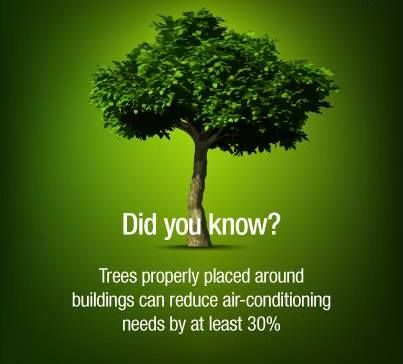 20 Reasons Why We Should Plant Trees