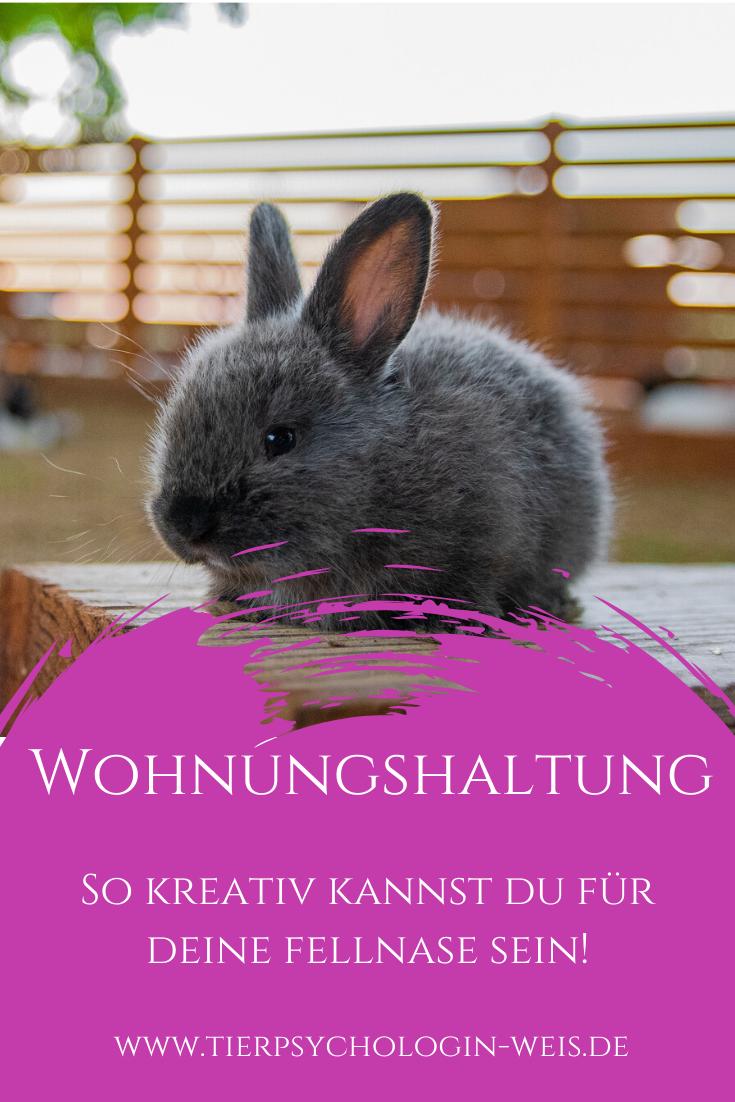 So Kreativ Kannst Du Fur Deine Fellnase Sein In 2020 Kaninchenkafig Kaninchenhaltung Kaninchen