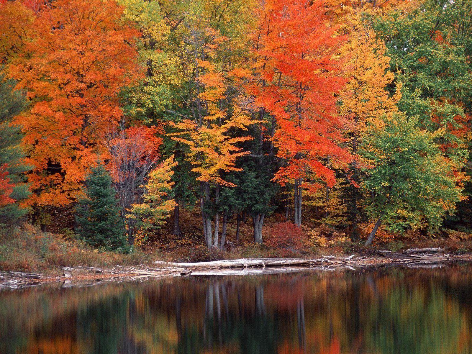 fondo-bosques-9.jpg (1600×1200)