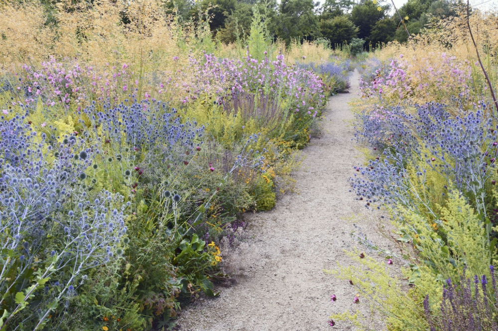 Photo of Ask The Expert: How to Plant a Meadow Garden, with James Hitchmough – Gardenista