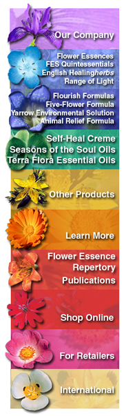 Fes Flowers Bridging Body And Soul Flower Essences Flower Essences Remedies Flower Remedy