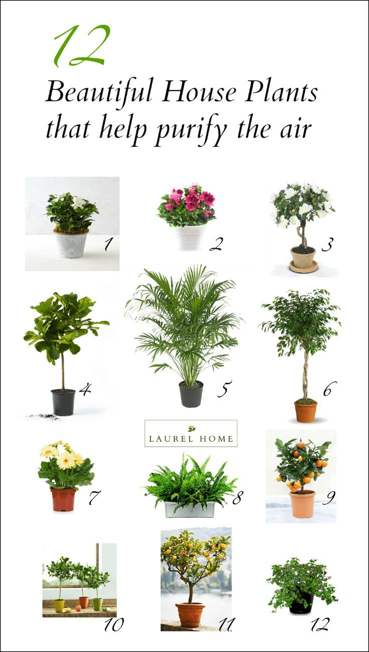 Air Purifying Plants For Bedroom: The Best (and Most Beautiful) House Plants For Cleaner Air