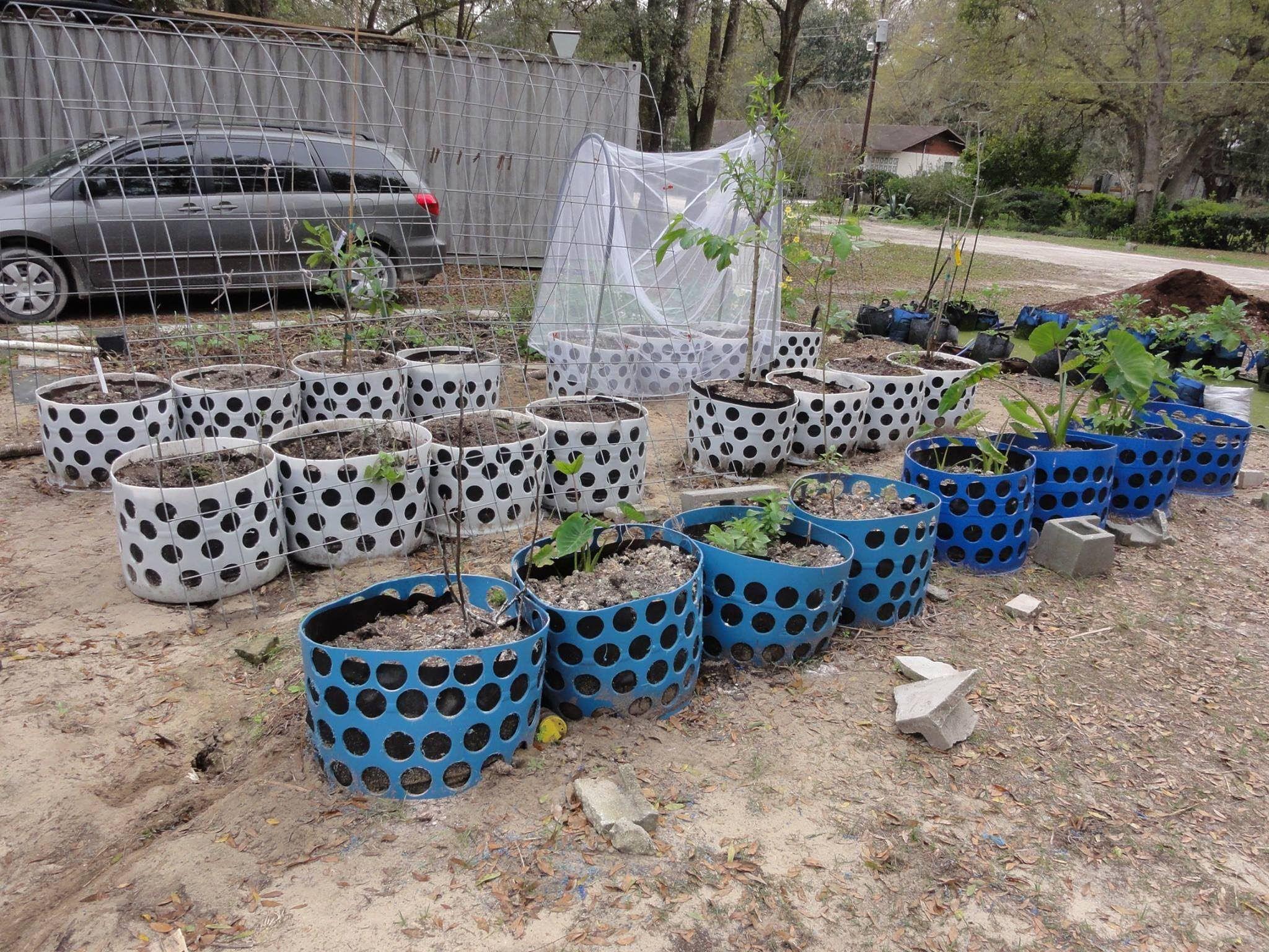 Mart Hale Interview His Mega Hybrid Underground Rain Gutter Grow System Wow Diy Self Watering Planter Rain Gutters Grow System