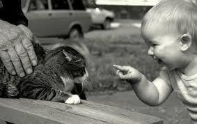 """Résultat de recherche d'images pour """"photo de chat et bébé"""""""