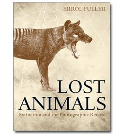 Family Relationship Essay  Extinct Animals Lost To Planet Earth But Preserved In Photographs  Excerpt  Photo Essay These  Animals Are Just A Few Of The Species To  Have Been  Ut Austin Transfer Essay also Essay On Terrorism In World  Extinct Animals Lost To Planet Earth But Preserved In Photographs  Mccarthyism Essay
