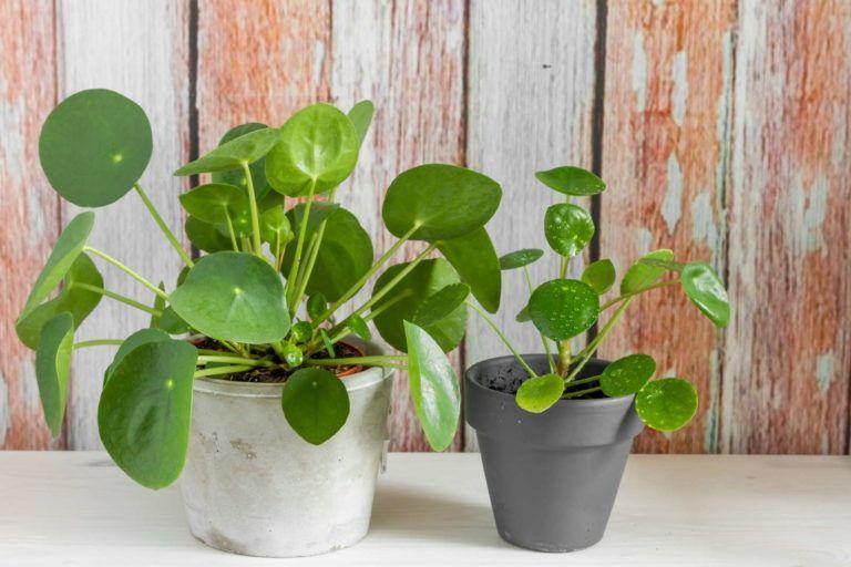 Büropflanzen: 10 pflegeleichte Pflanzen fürs Büro #pflegeleichtepflanzen