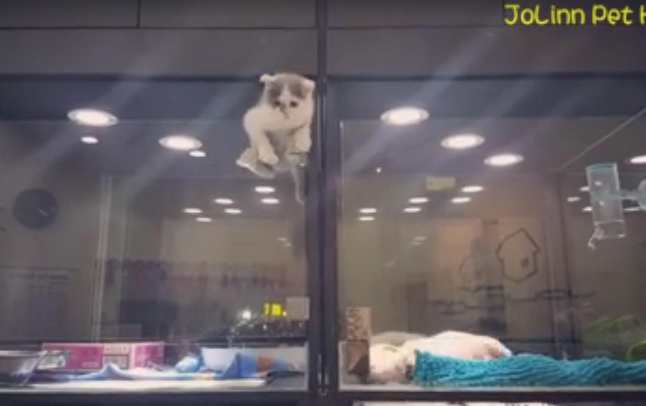 WATCH Kitten Climbs Pet Store Barrier to Be with Puppy Pal & WATCH: Kitten Climbs Pet Store Barrier to Be with Puppy Pal | Kitty ...