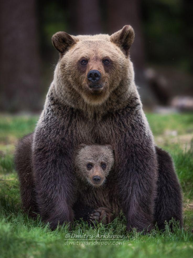 """Wunderschöne Tierwelt: """"Familienporträt von © Dmitry Arkhipov"""" - #Arkhipov #Dmitry #Familienporträt #Tierwelt #von #Wunderschöne"""