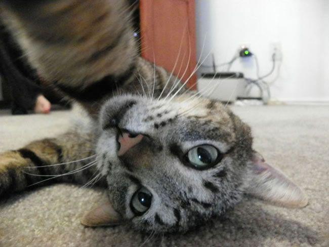 20 Funny Felines Taking Cat Selfies (shared via SlingPic)