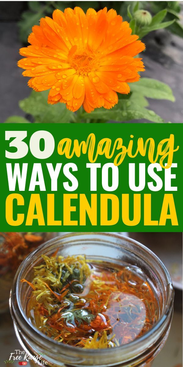 Calendula 30 Amazing Benefits and Uses in 2020 (With
