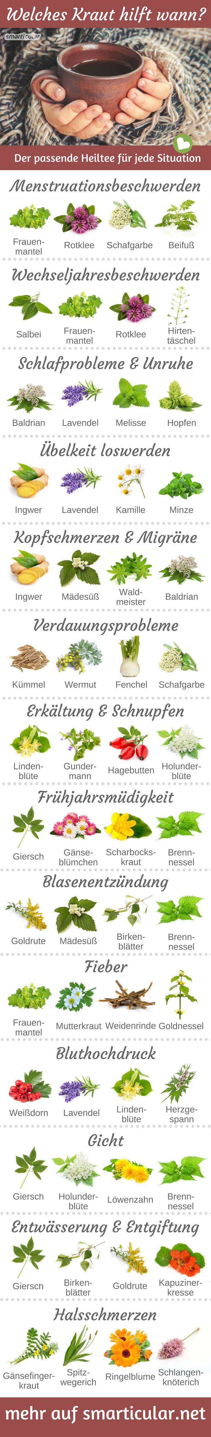 Photo of Which herb helps when? 13 Suffering and the right healing tea