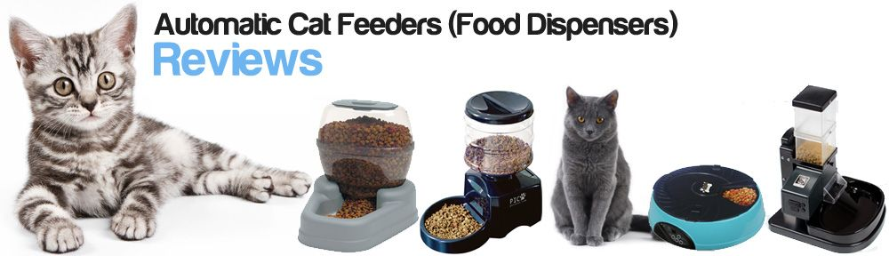 best automatic cat feeders food dispensers reviews dogs health