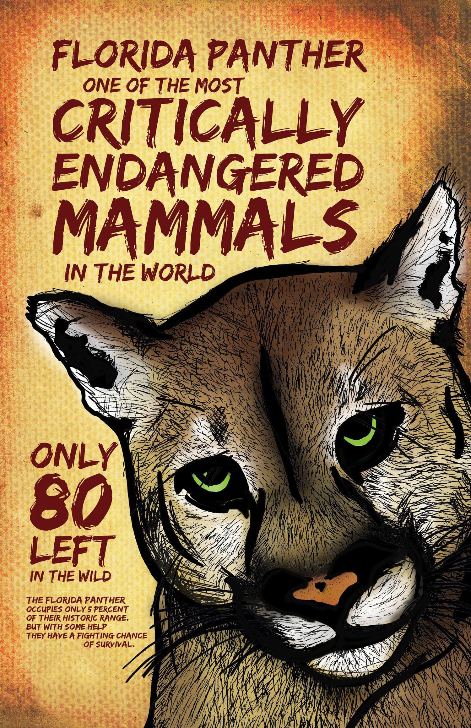 Florida Panther Endangered Species Poster Endangered