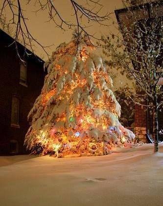 Snow Covered Christmas Tree Christmas Lights Christmas