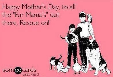 Happy Mother's Day to all, whether you have kids with 2 legs or 4.  Rescue on!!!