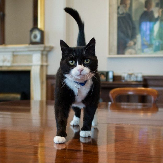 Palmerston, the new Chief Mouser at the Foreign Office