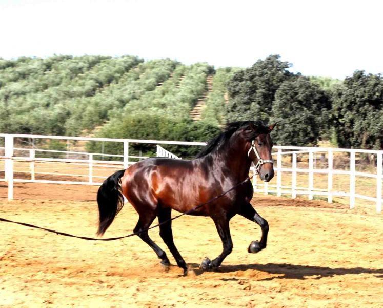 Tu caballo andaluz