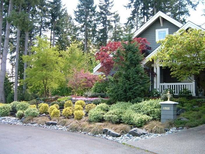 Small Evergreen Trees For Landscaping Small Evergreen 400 x 300