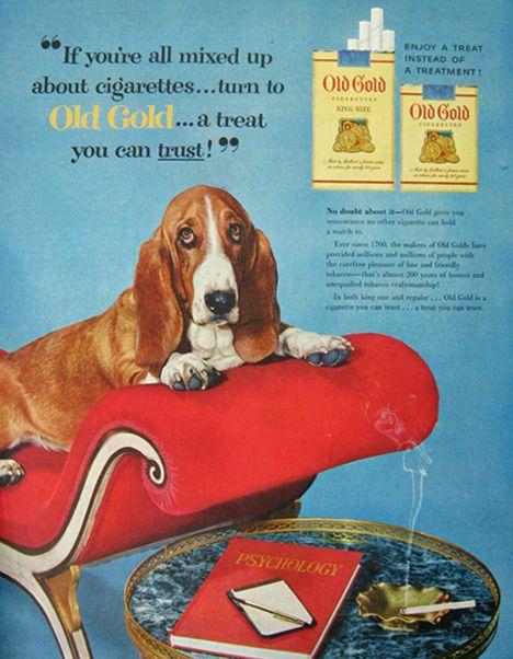 1954 Old Gold Cigarettes Ad Basset Hound Dog Basset Hound Dog