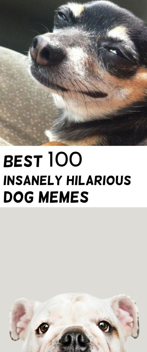 bad Nothing can be more then these Dog Memes