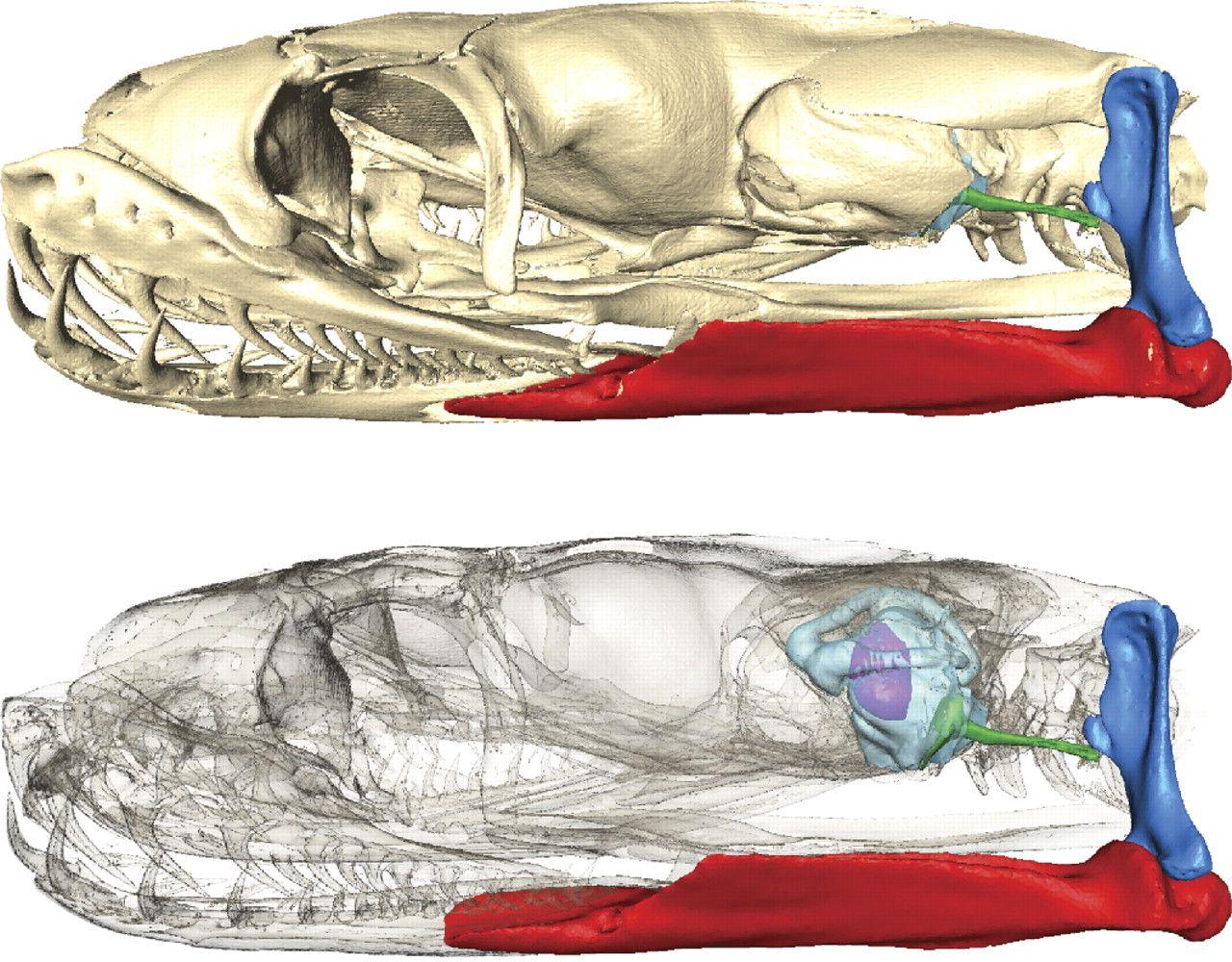 snake head anatomy - Google Search | snakes | Pinterest | Head ...