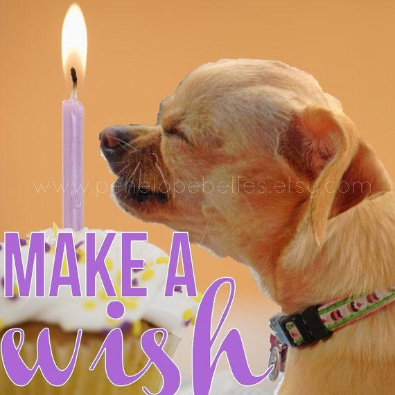 Chihuahua Birthday Card Dog Birthday Card Make A by PenelopeBelles – Chihuahua Birthday Cards