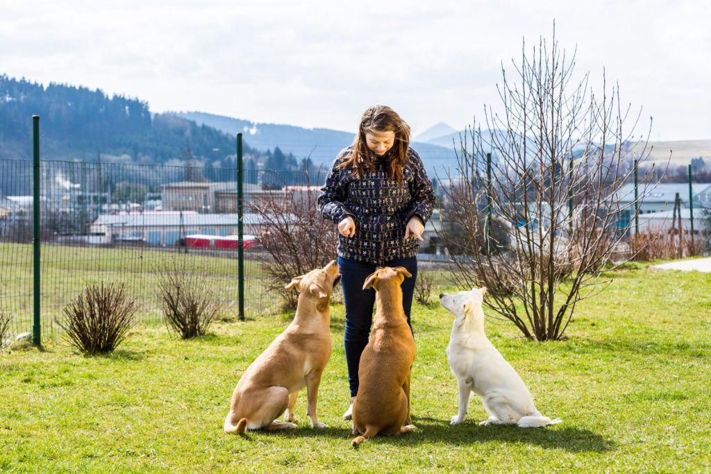 Exuberant worked dog lovers important source training