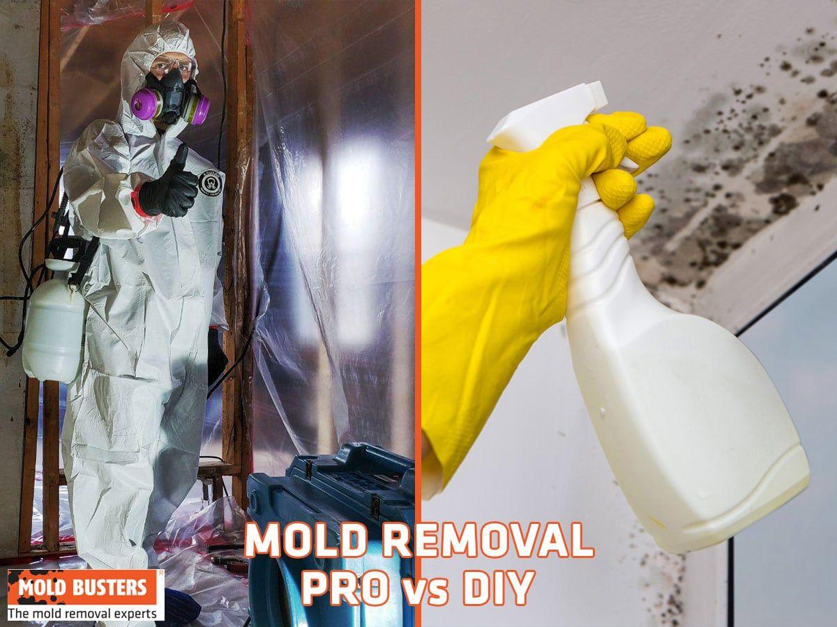 What Kills Mold DIY vs Professional Solutions Mold