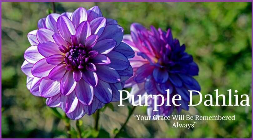 You Are Being Redirected Funeral Flowers Purple Dahlia Funeral Flower Arrangements