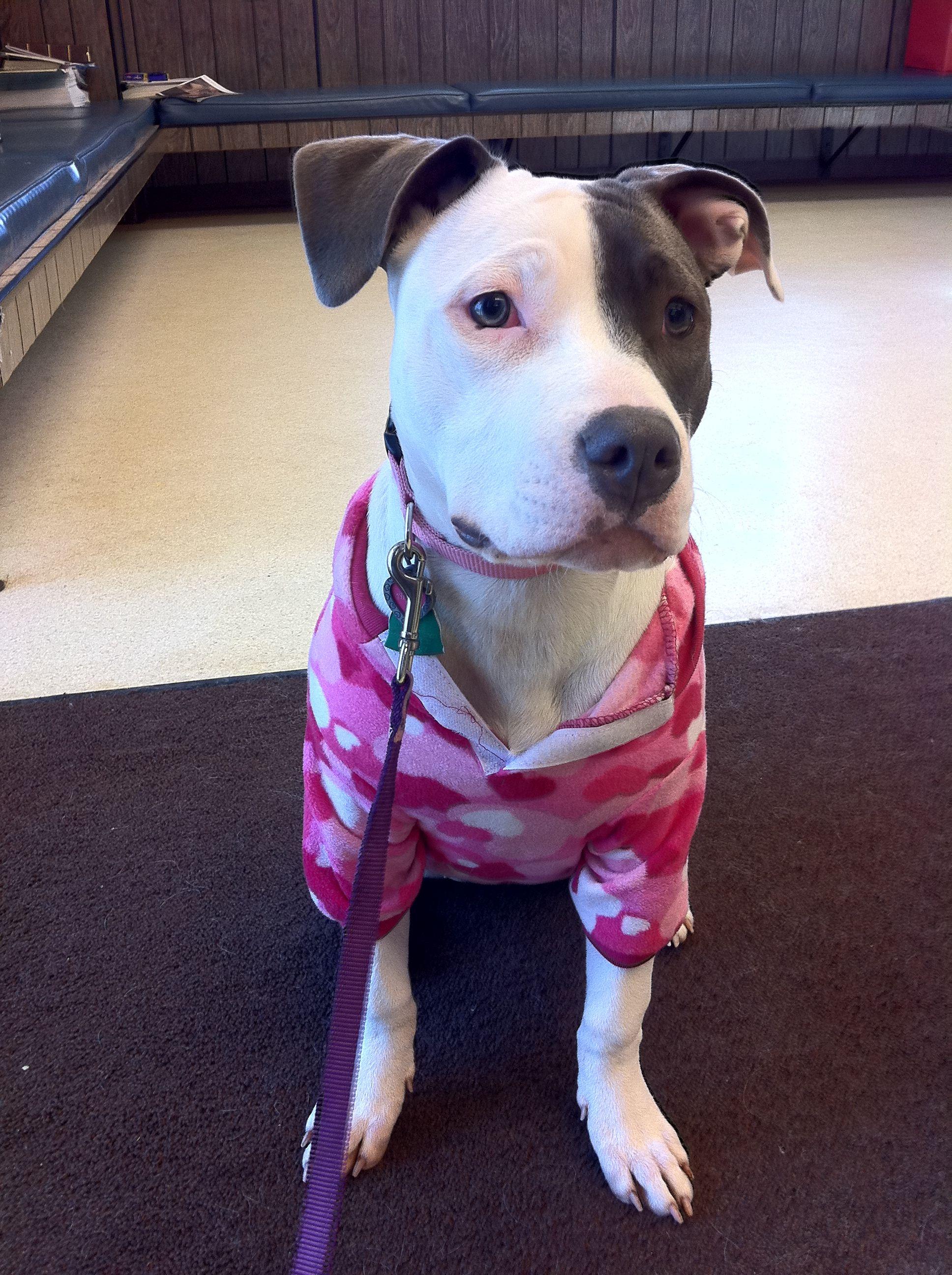 Dressed for the vet